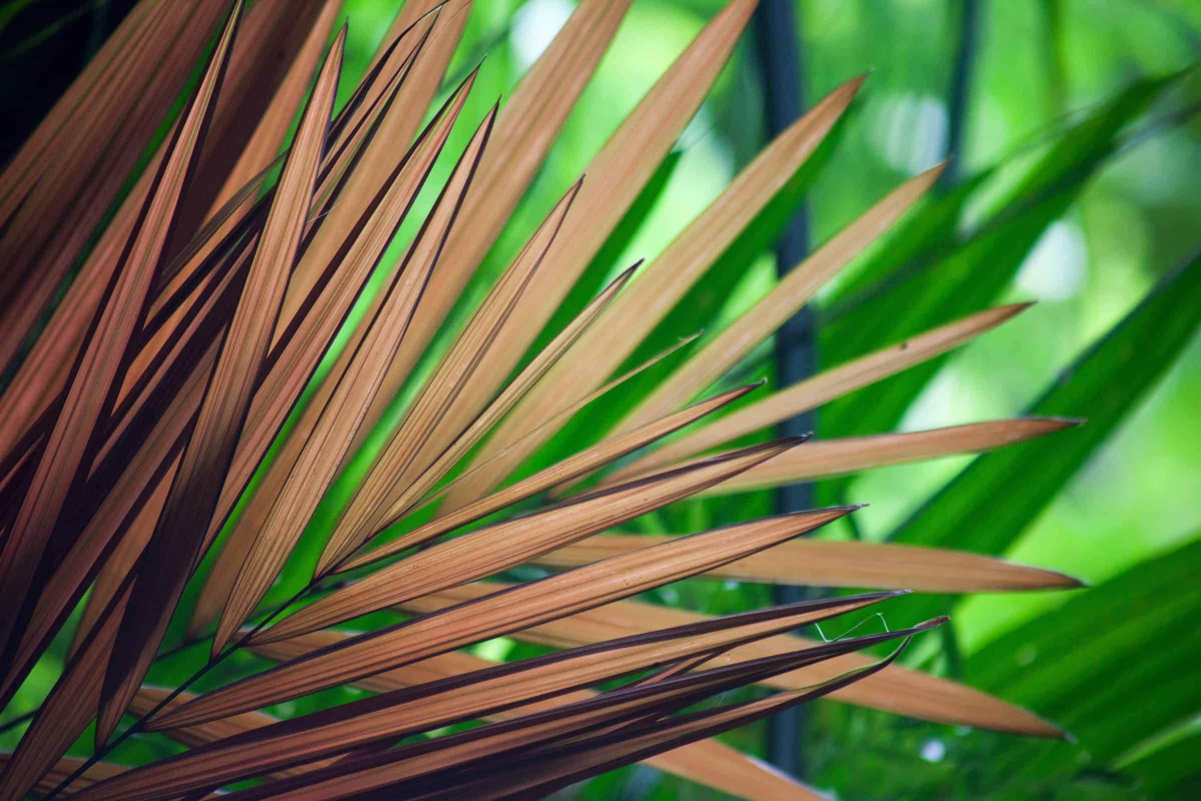 Palm Leves