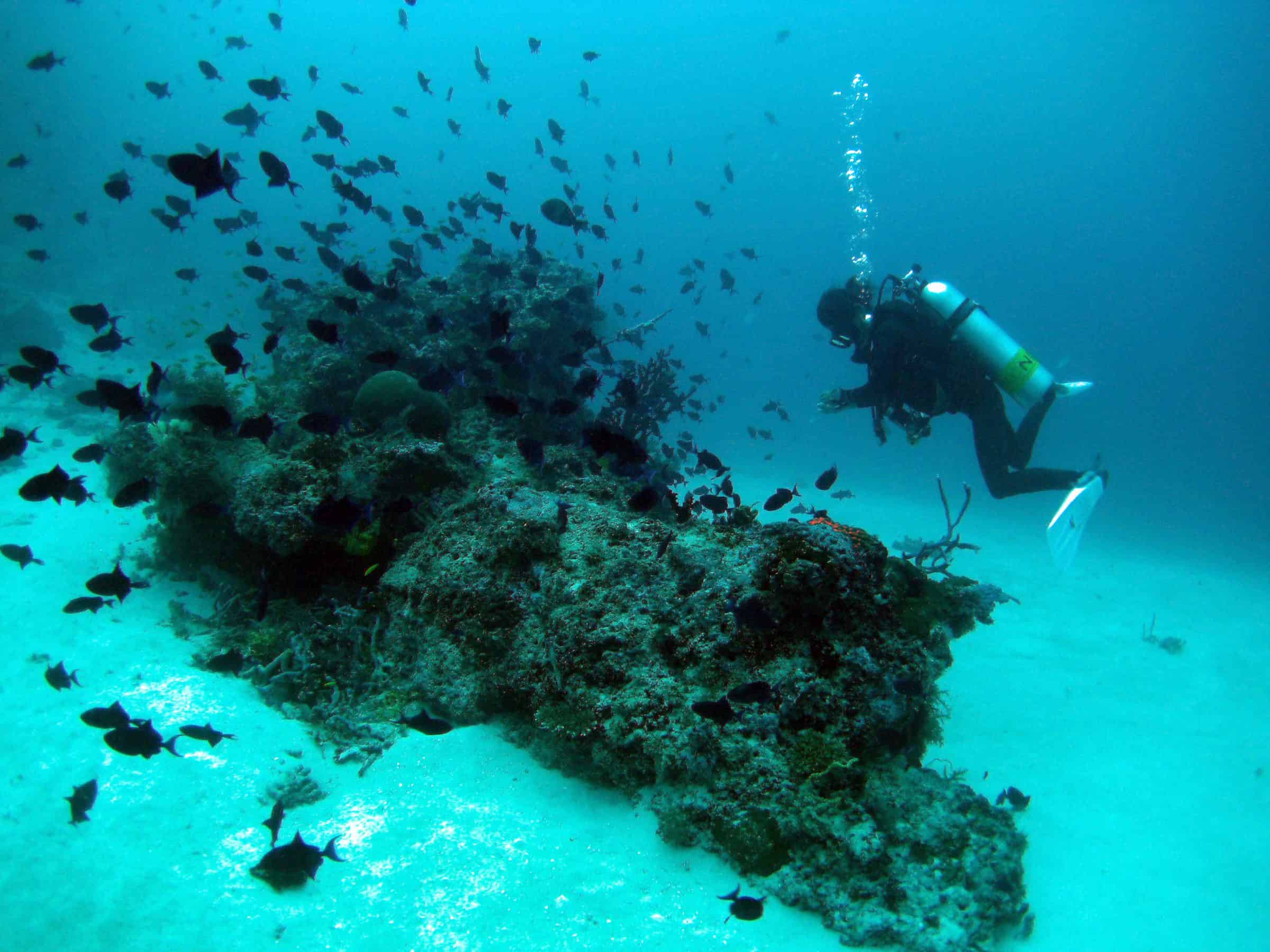 Diving amid fish and coral reefs