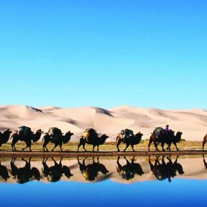 camels walking on waters edge