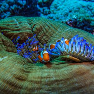 Indonesia- Fish and coral reef
